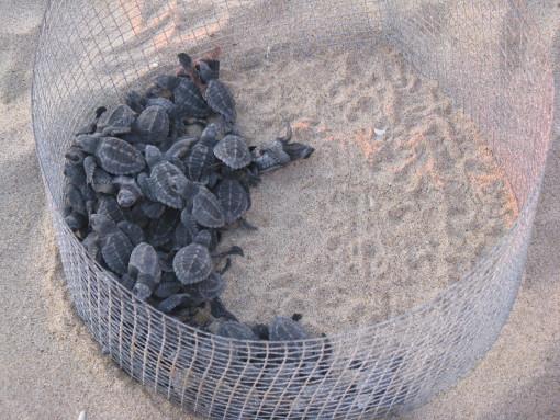 Estaban expuestas al sol, resecándose en una cubeta de arena sin agua, a punto de la inanición.