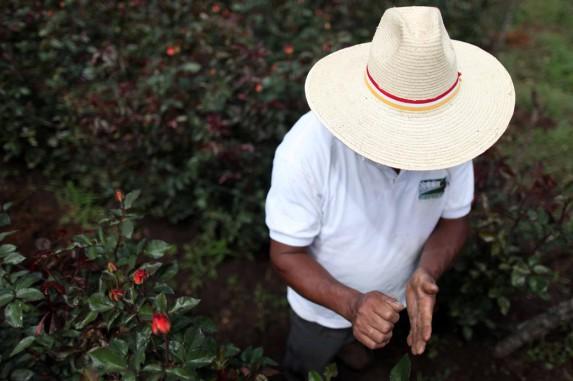 Un productor de flores de San Juan.