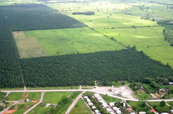 Una plantación de palma en Guatemala. Foto: Carlos Sebastián.