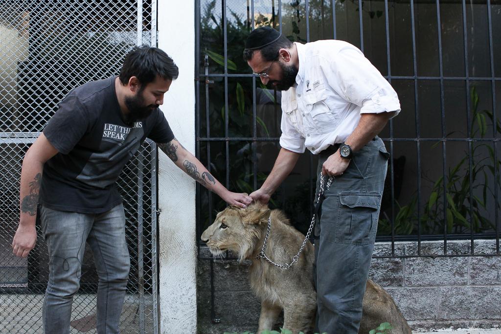 El periodista, el león y el rescatista.