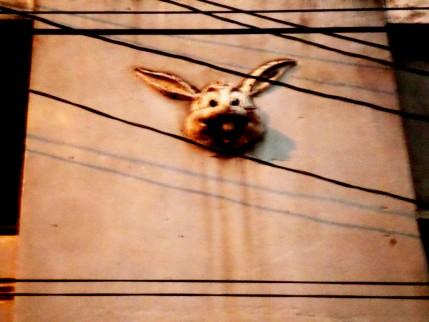 Conejo multidimensional.