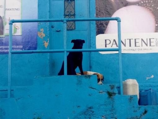 Publicidad y perro.