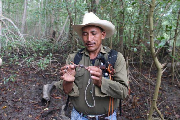 """José Horacio Soriano posee un cangrejo """"punche"""", que ha prosperado en la zona desde que comenzó la restauración del manglar. Foto de Martha Pskowski para Mongabay"""