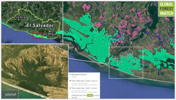 El delta del río Lempa alberga la mitad de los manglares restantes de El Salvador. Los datos satelitales de la Universidad de Maryland y las imágenes de Planet Labs demuestran que la expansión agrícola ha llevado a la pérdida de la cubierta arbórea en los manglares y sus alrededores en la última década. Las comunidades tratan de detener la desaparición de sus bosques de manglares.