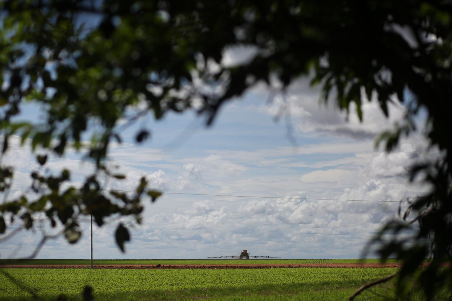 Plantaciones de soya, al norte de Mato Grosso.