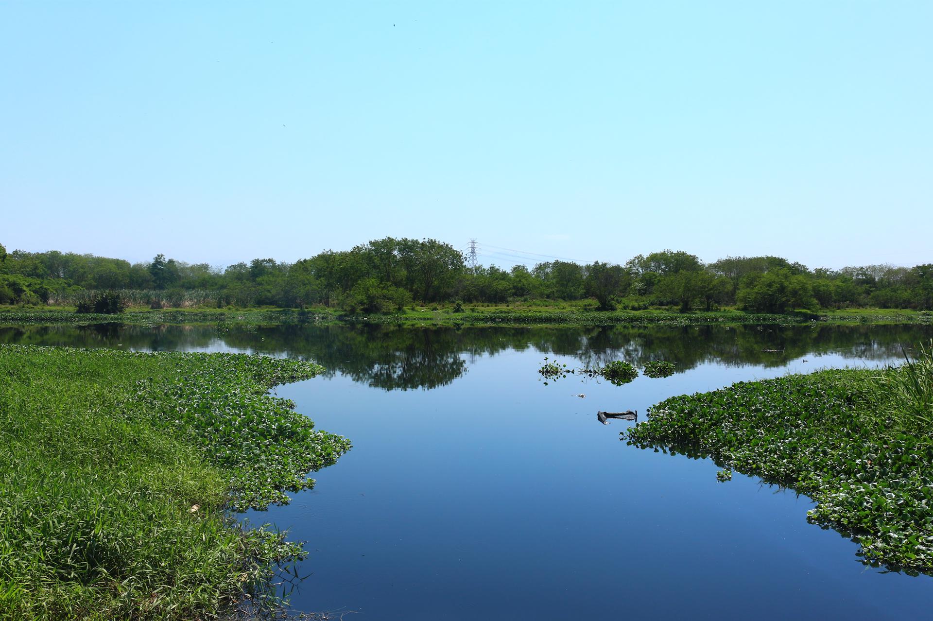 Cercado por los ríos Iguaçu y Sarapuí, Guedes parece estar brotando de un oasis verde, ya que el área está cercada de manglares y taboas [espadaña tropical], una planta que crece en regiones pantanosas.
