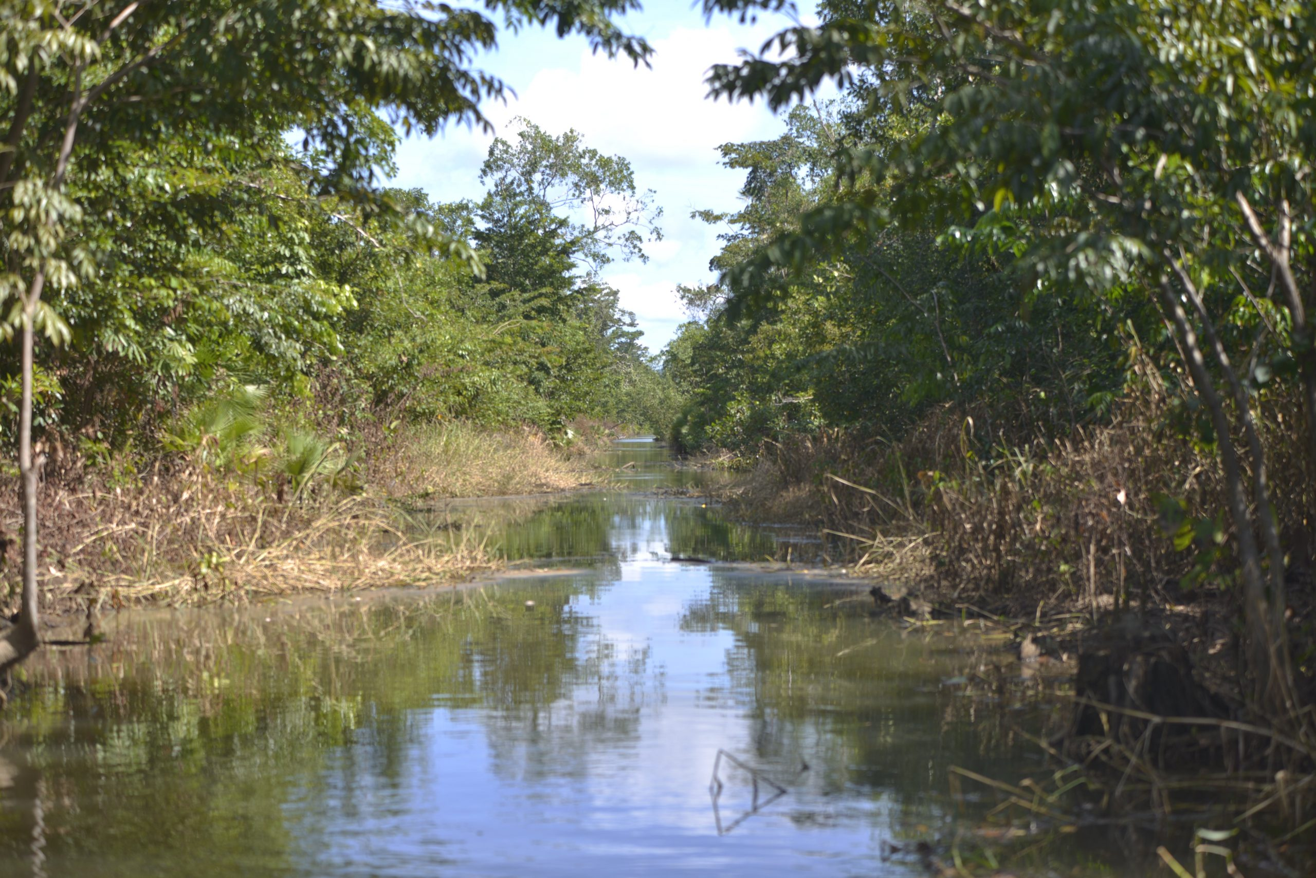 Illegal channels are like artificial rivers that dry out wetlands that are later used as pasture for livestock / Credit: Jesús Alfonso