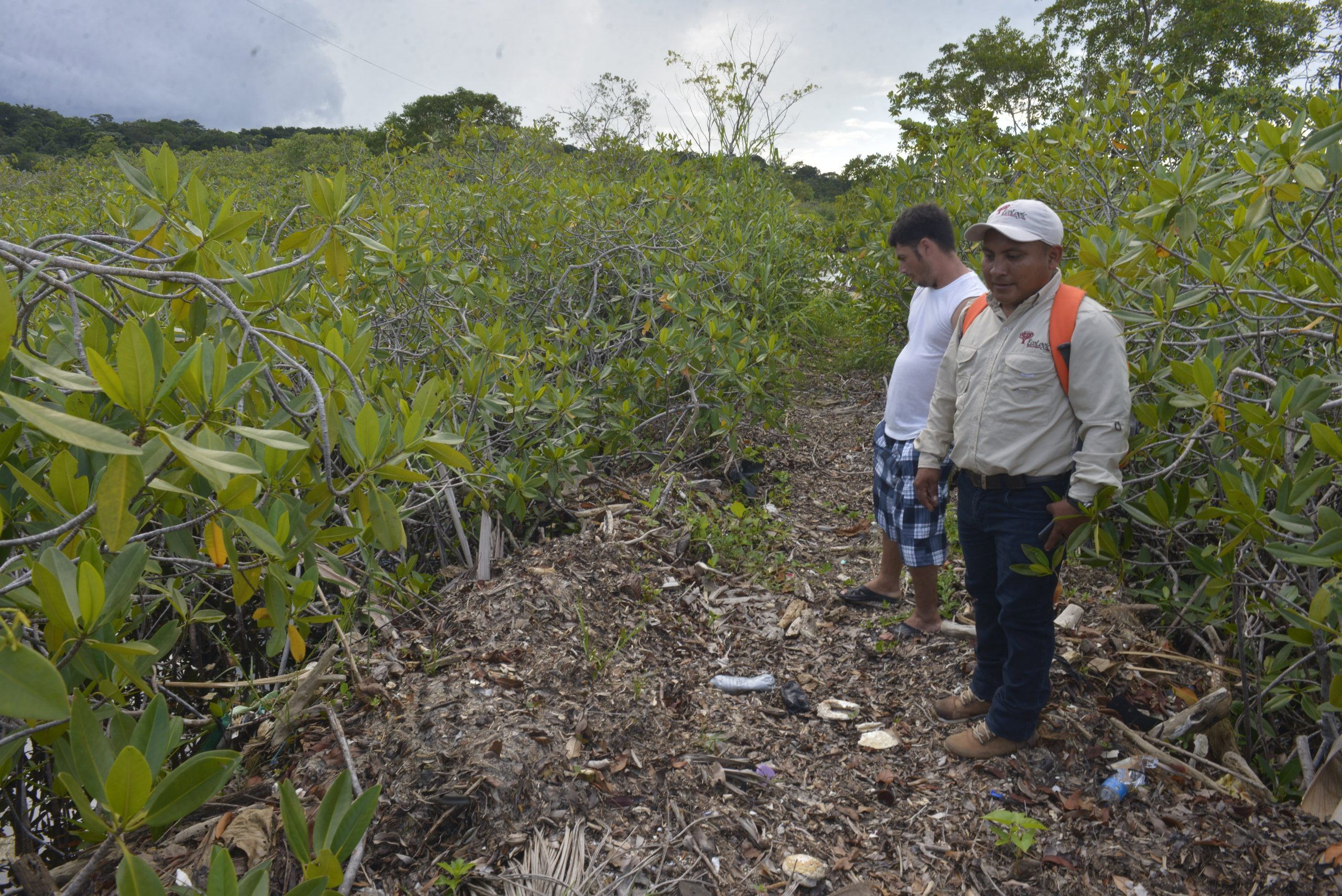The López family built a trail through the mangroves with the trash they find every morning / Credit: Jesús Alfonso