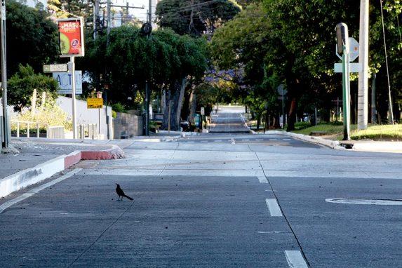 Con las calles vacías, la naturaleza en la ciudad se ve distinta.